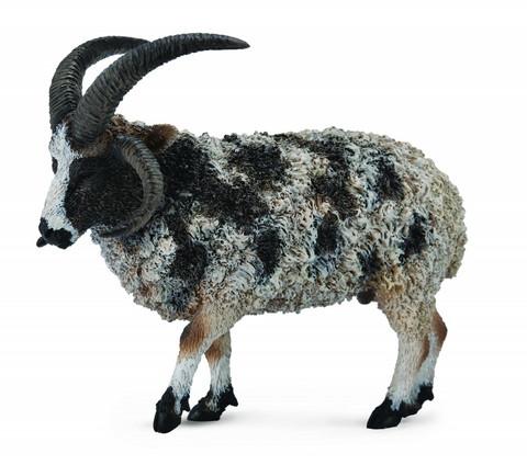 lammas, jaakobinlammas Collecta