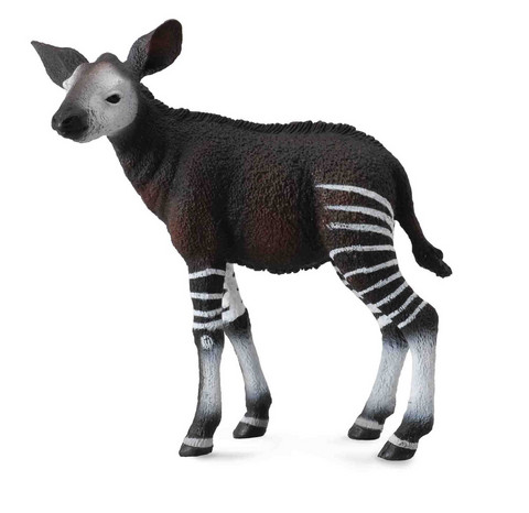 Okapi vasa Collecta