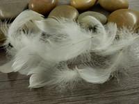 Hanhen höyheniä, 4-7cm, valkoinen, 50kpl