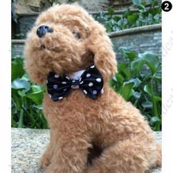 Koiran rusetti black & white