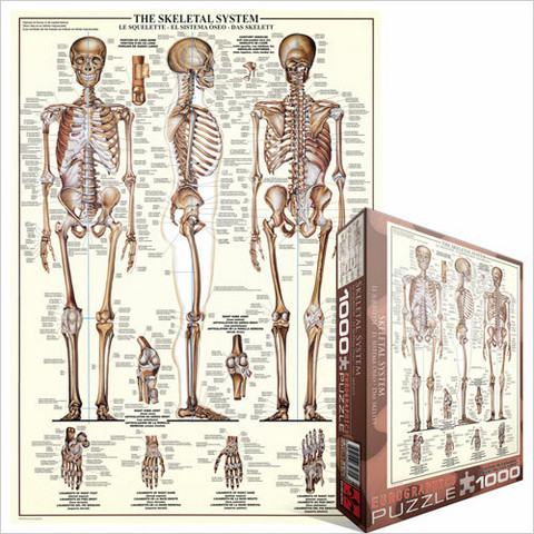 Eurographics The Skeletal System palapeli