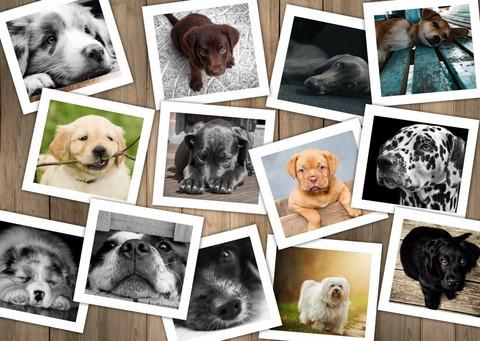 Grafika Koirat palapeli