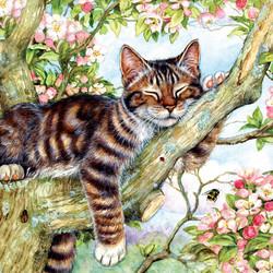 SunsOut Debbie Cook - Sleepy Cat palapeli 500 palaa
