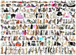 Eurographics The World of Cats palapeli