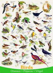 Euroraphics Birds palapeli