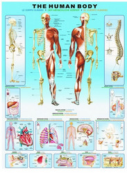 Eurographics Human Body palapeli