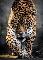 Clementoni Jaguar palapeli