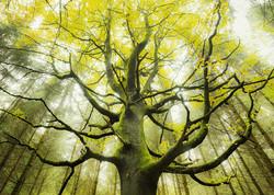 Schmidt Stefan Hefele Dream Tree palapeli