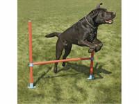 Rosewood agilityn rengaseste 30-80cm, läpimitta 51cm sis. kantokassin