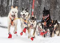 Non-Stop Dogwear Long Distance Bootie 4kpl Blue 8-9cm