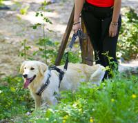 I-DOG Harness Style valjaat