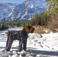 BODYGUARD - PROTECTIVE ALL-WEATHER DOG PANTS