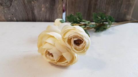 Ranunculus offwhite