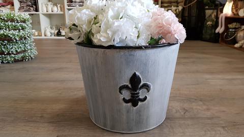 Zinkpot lily