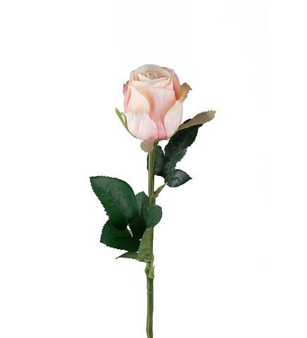 Rose light pink/peach