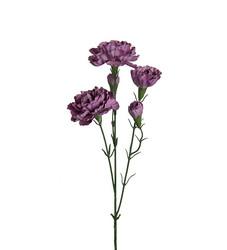 Carnation branch violet