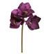 Amaryllis branch purple
