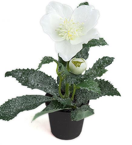Christmas rose 2 model