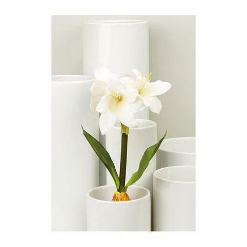 Amrylli white