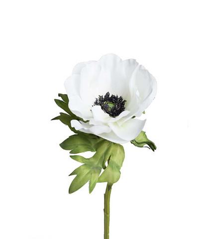 Anemone white