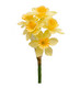 Narcissus branch yellow