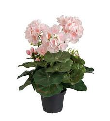 Pelargon light pink
