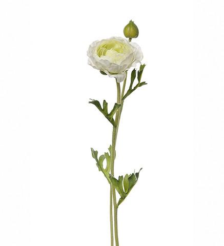 Ranuncel white
