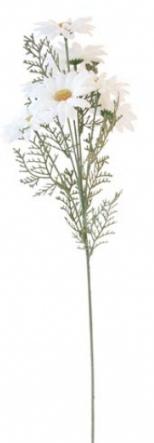 Daisy silkflower