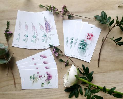 Kasvit pakettikorttipakkaus 12kpl