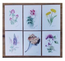 Kuusi erilaista kasviaiheista postikorttia