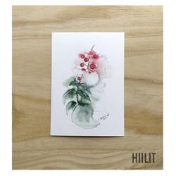 Pihlaja postikortti