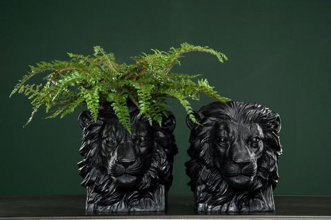 Leijona suojaruukku