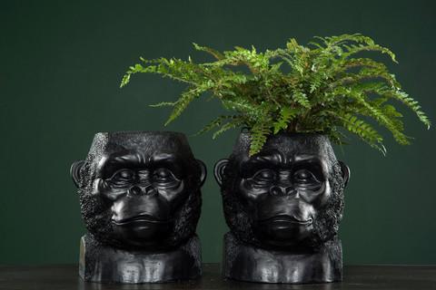 Gorilla suojaruukku