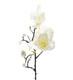 Magnolia 60cm