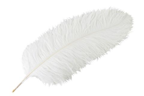 Valkoinen strutsin sulka  60cm