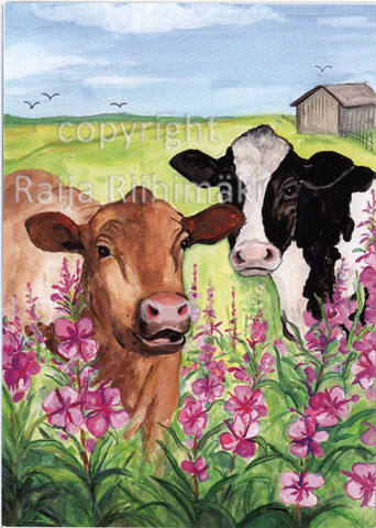 Postikortti / Lehmät