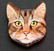 Kissanpäämagneetti nro 5