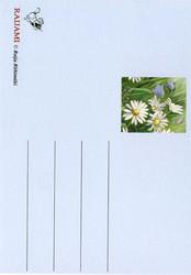 Kukkakortti päivänkakkarat