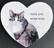 Vanerisydän valkokirjava kissa