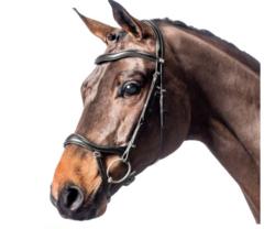 Horse Guard Performance suitset