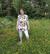 AAVA tunika Liljameri pitkähihainen sateenkaari XS-3XL taskuton/taskuilla