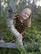 LAINE mekkotunika Hillat 86-152cm trikoo