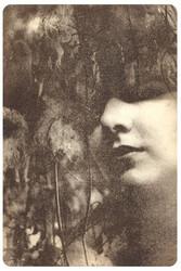 Brown Diva -taidepostikortti