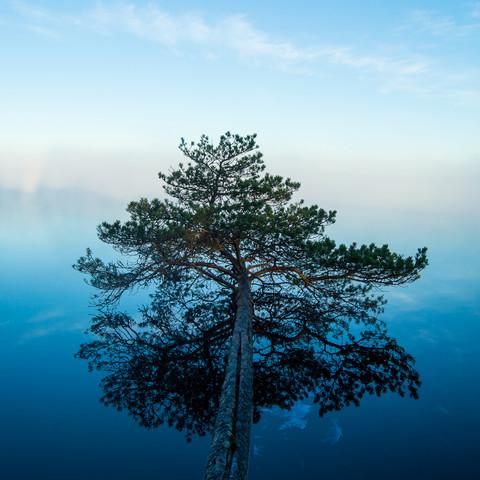 Terveysmetsäretki Kurjenrahkan kansallispuistossa su 18.7.2021