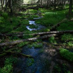 Yksityinen Terveysmetsäretki Lauhanvuoren kansallispuisto, tilausretki