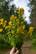 Värikasviretki Lauhanvuoren kansallispuistossa su 25.7.2021