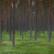 Terveysmetsäretket Lauhanvuoren kansallispuistossa