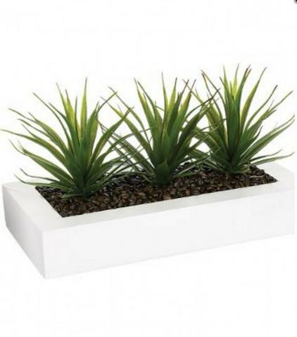 Aloe Vera valkoisella ruukulla