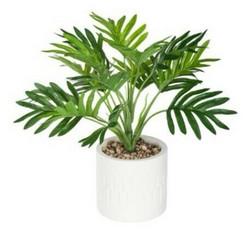 Palm kasvi ja ruukku