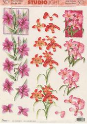 Studiolight 3d-kuvat kauniit liljankukat